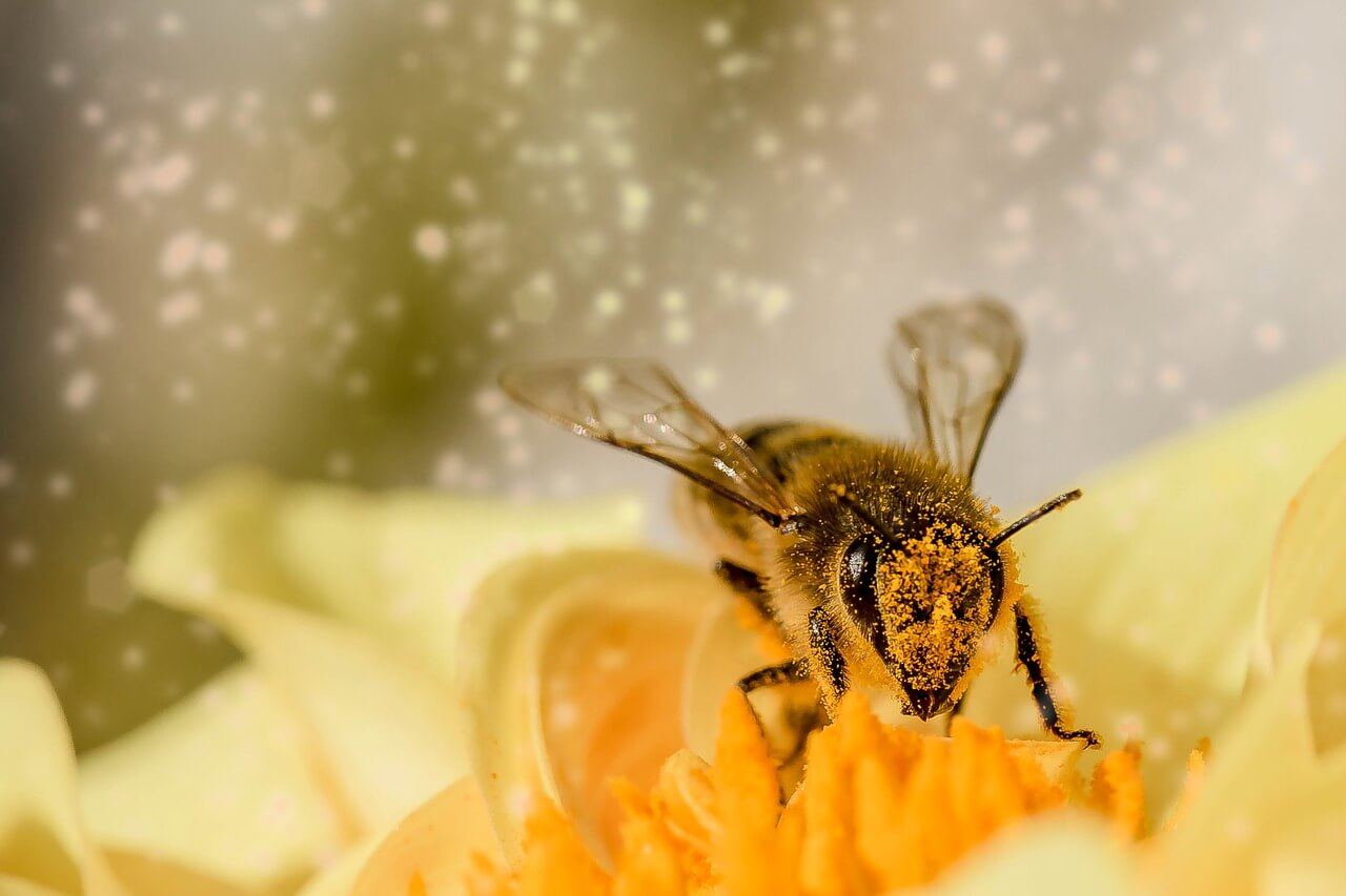 Drei Tipps an fleißige Bienen, endlich mal weniger zu tun